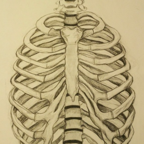ribcage study, carbon pencil. 22 by 30 inches, 2011